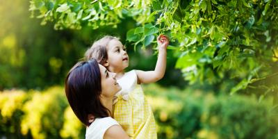 3 Benefits of Routine Tree Maintenance, Center City, Minnesota