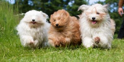How DNA Tests Can Benefit Your Dog, Kabletown, West Virginia