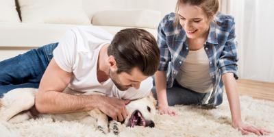Carpet-Cleaning Specialists Share 3 Ways to Keep Floors Clean in Homes With Pets, Gold Hill, North Carolina
