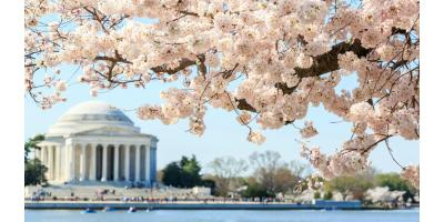 National Cherry Blossom Festival 2019 – Save On Parking!, Manhattan, New York
