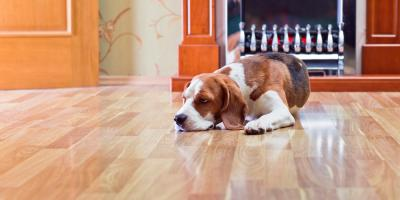 5 Hardwood Flooring Tips for Dog Owners, Chesterfield, Missouri