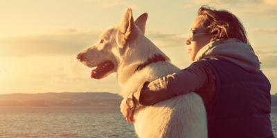 How Your Dog Will Benefit From Visiting a Chiropractor, Columbus, Nebraska