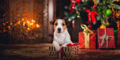 After the Dog Groomer, Save on Doggie Stocking Stuffers!, Oyster Bay, New York