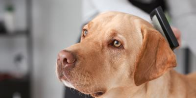 Grooming 101: 3 Ways to Prevent Static in Your Pet's Fur, Churchville, New York