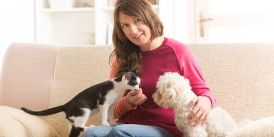 Pet Sitting Experts List 5 Tips for Reducing Lead Exposure, Churchville, New York