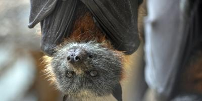 3 Advantages of Installing a Bat House on Your Property, Miami, Ohio
