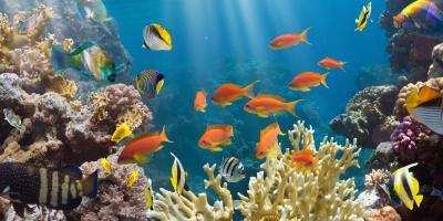 How to Move an Aquarium, Cincinnati, Ohio