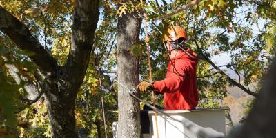 4 Tree Rot Types Explained, Cincinnati, Ohio