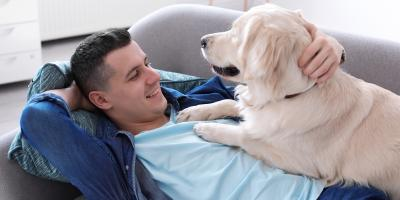 A Guide to How Pets Affect Your Home's HVAC System, Wyoming, Ohio
