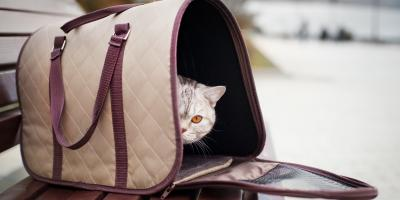 5 Tips for Traveling With Pets This Summer, Sycamore, Ohio