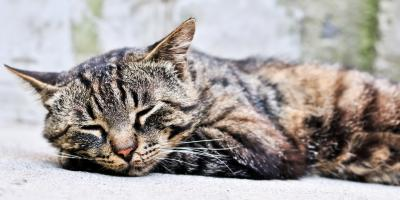 How to Properly Care for an Aging Cat, Springfield, Ohio