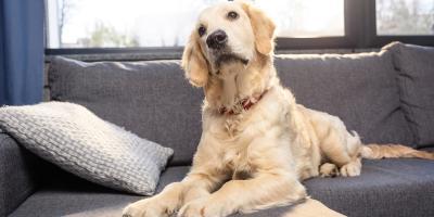 3 Pet-Friendly Sofa Fabrics, Symmes, Ohio