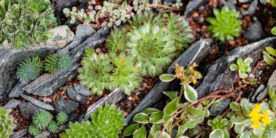 5 Gardening Tips for Propagating Succulents, Colerain, Ohio