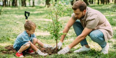 The Do's & Don'ts of Tree Planting, Hamilton, Ohio