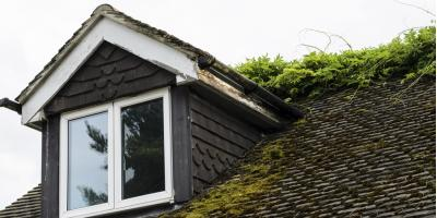3 Reasons to Be Concerned About Mossy Rooftops, Cincinnati, Ohio