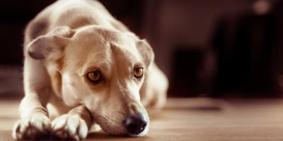 3 Tips to Comfort Your Pet When They Lose a Companion, Springfield, Ohio