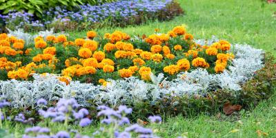 4 Insect-Repelling Plants for Gardens, Colerain, Ohio