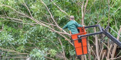What Questions Should You Ask Before Hiring a Company for Tree Work, Blue Ash, Ohio