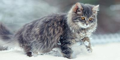 5 Tips to Protect Your Pet's Skin During the Winter, Sharonville, Ohio