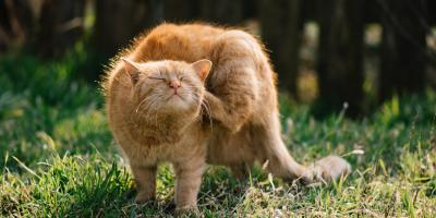 3 Common Skin Conditions in Cats, Sharonville, Ohio