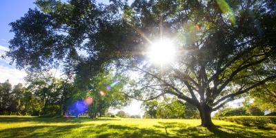 FAQ About Iron Chlorosis in Trees, Cincinnati, Ohio