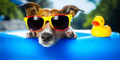 3 Tips to Protect Your Pet From the Summer, Sharonville, Ohio