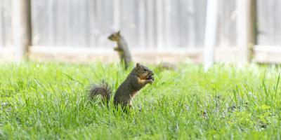 Why You Shouldn't Feed Squirrels, Miami, Ohio