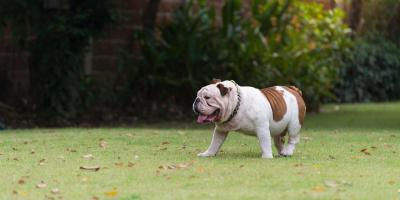 3 Reasons Why Dogs Gain Weight, Clarksville, Arkansas