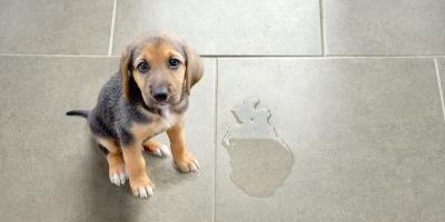 4 Surprising Effects of Pet Urine Stains, Lincoln, Nebraska