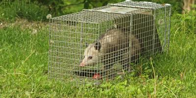 Why Do Opossums Play Dead?, Miami, Ohio