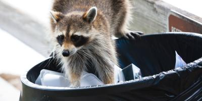 3 Tips for Keeping Critters Out of Your Trash, Miami, Ohio