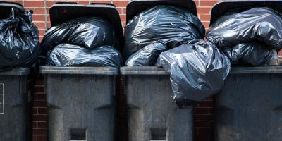 4 Common Pests That Can Be Attracted to Your Garbage, Columbia, Missouri