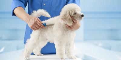 5 Tips for Reducing Your Dog's Pet Grooming Anxiety, Columbia, Missouri
