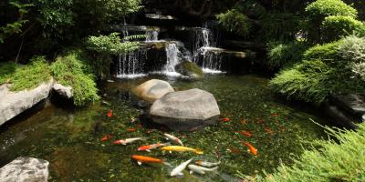 4 Ways to Spruce Up Your Koi Pond This Summer, Columbia, Missouri