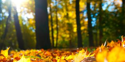 3 Autumn Landscaping Tips to Prepare Trees For Winter, Jessup, Maryland