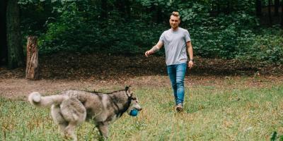 3 Tips to Help Your Dog Lose Weight, Columbus, Nebraska