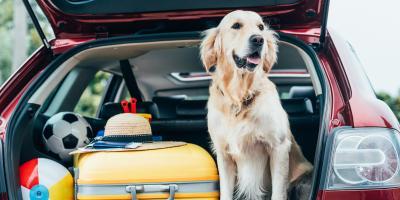 3 Tips to Prepare Dogs for Boarding, Columbus, Nebraska