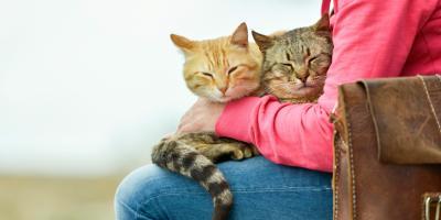 4 Tips for Moving Pets Into a New Home, Denver, Colorado