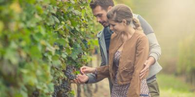 What to Expect During a Wine Tour , Terryville, Connecticut