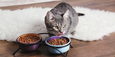 Pamper Your Pet With These Discounted Treats & Vitamins, West Fargo, North Dakota