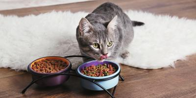 Pamper Your Pet With These Discounted Treats & Vitamins, Eureka, California