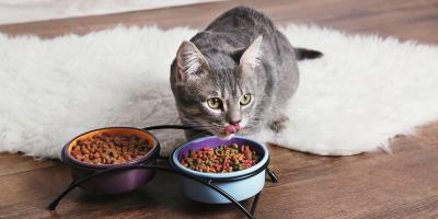 Pamper Your Pet With These Discounted Treats & Vitamins, Chicago, Illinois