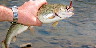 3 Trout Fishing Techniques to Help You Catch More, Whiteville, Arkansas