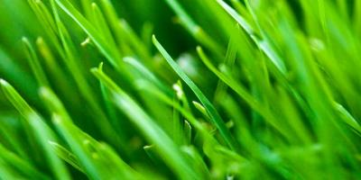 Hiring Lawn Technician Assistants, Columbus, Ohio