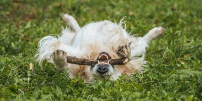 Why Do Dogs Love Rolling in the Grass?, Covington, Kentucky