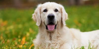 3 Ways Your Dog Can Benefit From Pet Boarding During Summer Vacation, Covington, Kentucky