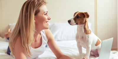3 Pet First Aid Tips Every Owner Should Bookmark, Covington, Kentucky