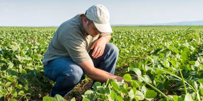 How Crop Insurance Protects You, Saltillo, Nebraska