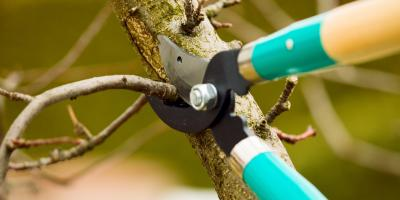 How & When to Do Tree Pruning, Holland, Wisconsin