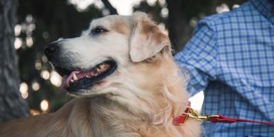 4 Tips to Leash Train Your Puppy, Jacksonville East, Florida